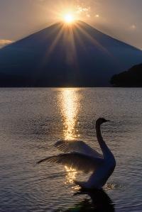 1600-yuga-kurita-diamond-fuji-yamanakako-lake-swan_KS13288