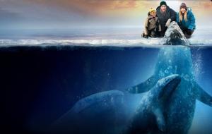whale01b