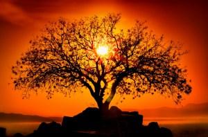 Gratitude-Tree-of-Life