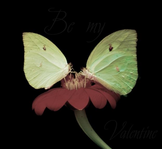 sharing_love_by_gemininana