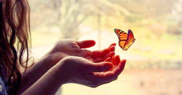 surrender_butterfly-720x377